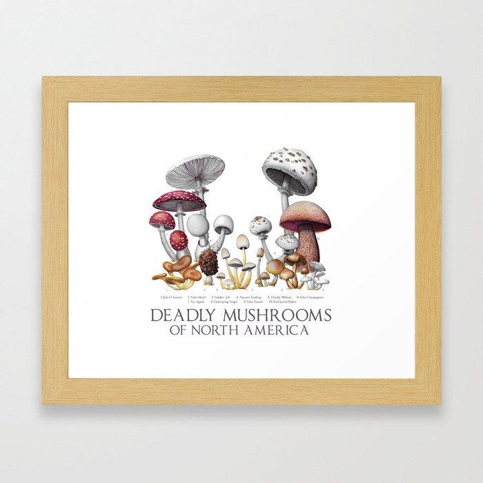 Deadly Mushrooms of North America Framed Art Print