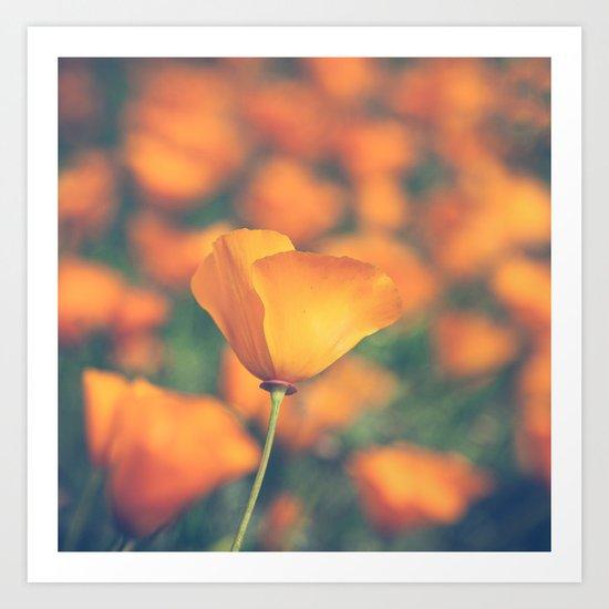 Poppyland Art Print