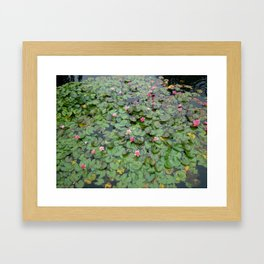 Lotus Garden Framed Art Print