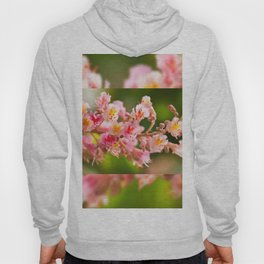 Aesculus red chestnut tree blossoms Hoody