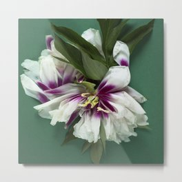White peony on green Metal Print