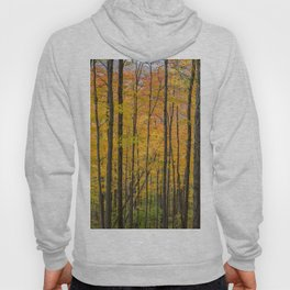 Fall Forest Leaves Hoody