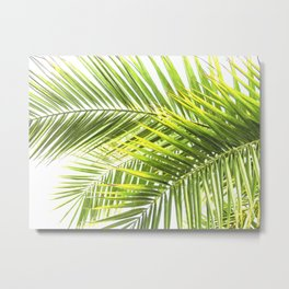 Palm leaves tropical illustration Metal Print