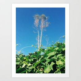 Nature Walk 002 - Plant Tower Art Print