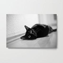 What? asks the cat Metal Print