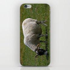 Sheep Baaaaa... iPhone & iPod Skin