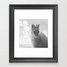 Winford Kitty Framed Art Print