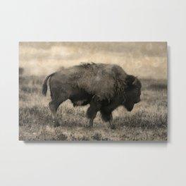 Plains Bison   -  American Buffalo Metal Print