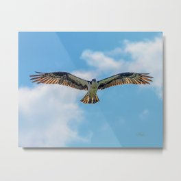 Nine Mile osprey IV Metal Print