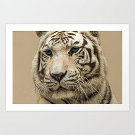 FACE OF THE WHITE TIGER Art Print