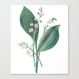 Watercress Plant Painting Artwork Canvas Print