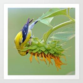 Sunflower at Work Art Print