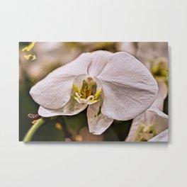 Single White Flower Closeup Metal Print