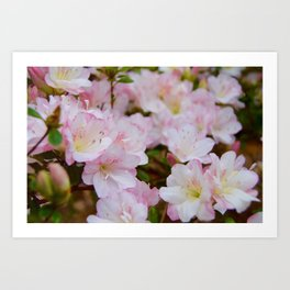 Blooming Azalea Flowers Art Print