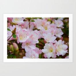 Blooming Azalea Flowers Art Print