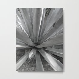 Agave Cactus, warm day, Metal Print