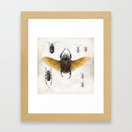 The Vintage Beetles Collection Framed Art Print