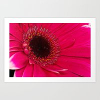 hot pink Art Prints featuring Hot Pink by Paul & Fe Photography