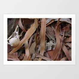 Bird Skull in Leaf Litter Art Print