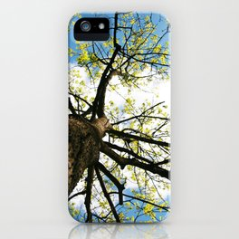 Tree Blossoming in the Blue Sky iPhone Case