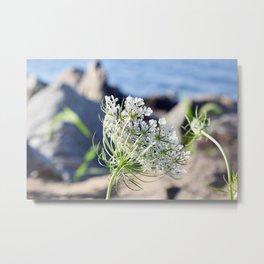 Little White Beach Flowers Metal Print
