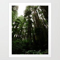 Redwoods #1 Art Print