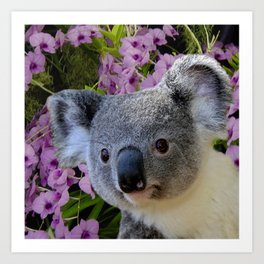 Koala and Orchids Art Print