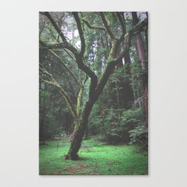 Mossy Womb Canvas Print