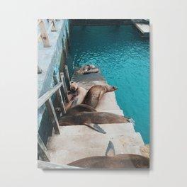 galapagos naptime Metal Print