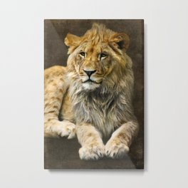 The young lion Metal Print
