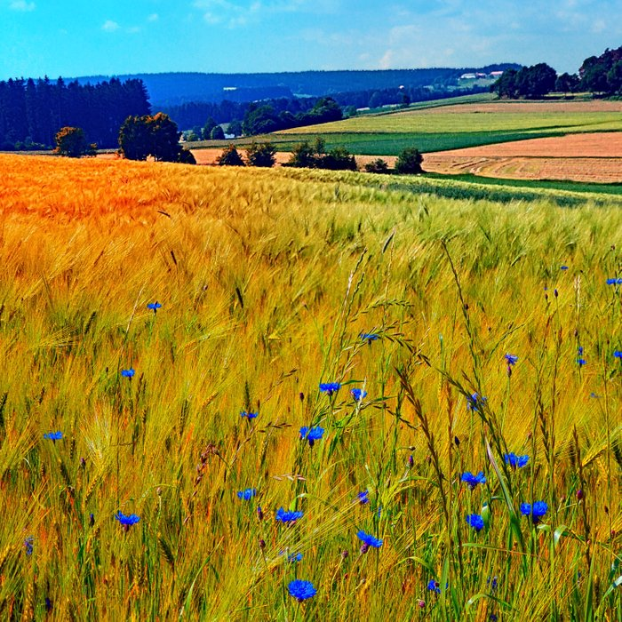 Fields of summer with flowers and scenery Comforters
