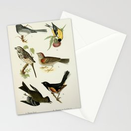 Snow Bird, Song Sparrow, Phoebe, American Goldfinch, Vesper Sparrow, Towhee10 Stationery Cards
