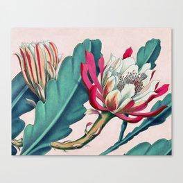 Flowering cactus IV Canvas Print
