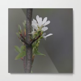 Twig and Blossom Metal Print