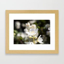 sunlit white flower Framed Art Print