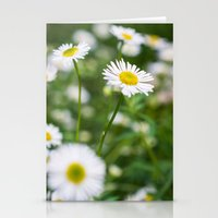 daisies Stationery Cards featuring Daisies by Michelle McConnell