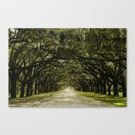 Spanish Moss Canopy Canvas Print