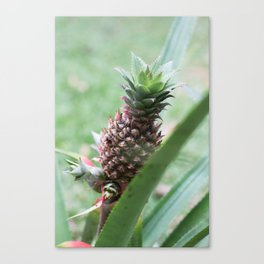 Amazon Starfruit Canvas Print