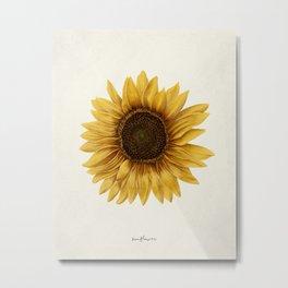 Realistic Sunflower - Kansas State Flower Metal Print