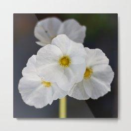 White blooming flower Metal Print