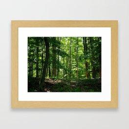 Pine tree woods Framed Art Print