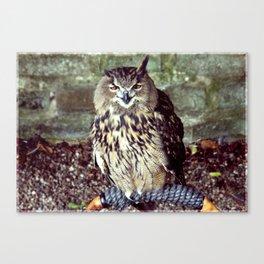 Happy Owl. Canvas Print