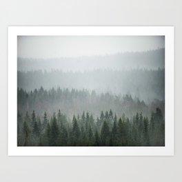 Parallax Monochromatic Misty Pine Forest Landscape Photo Art Print
