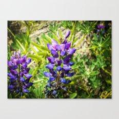 A Long Flower Canvas Print