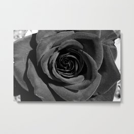 Classic Rose Metal Print