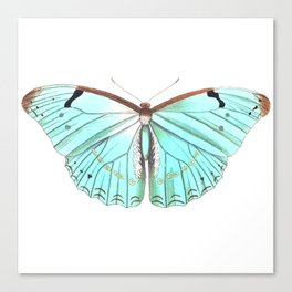 Butterfly Flutter By Canvas Print