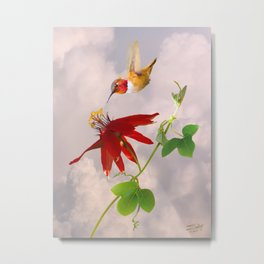 Rufous Hummingbird and Passion Flower Metal Print