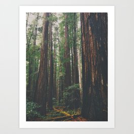 The Redwoods Art Print