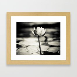 Black and White Cajun Water Lily Framed Art Print