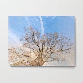 Nature in Winter Metal Print